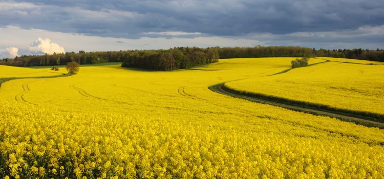 Door closes on crop-based biofuels